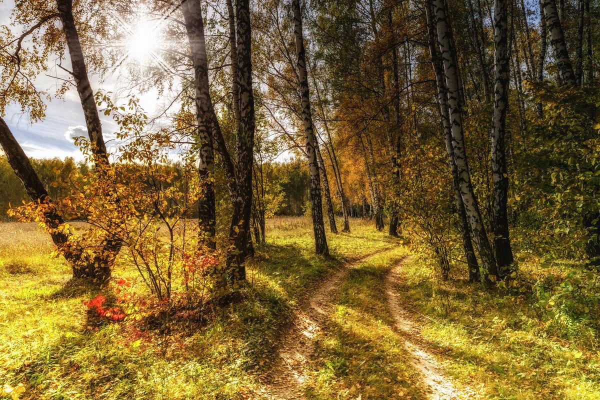 В лесу - Igor Yakovlev