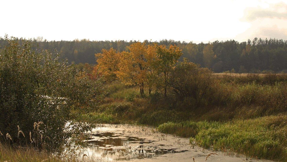 золотая осень - оксана