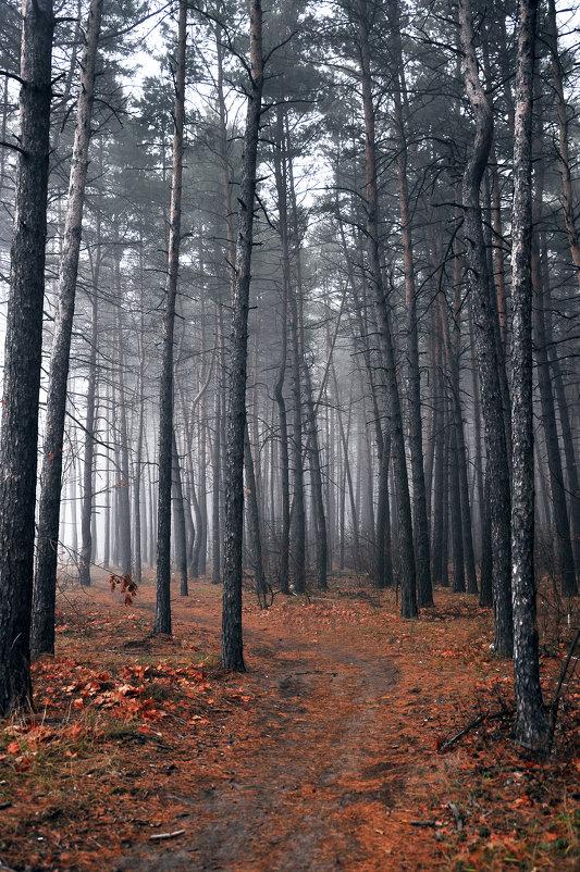 Туман - Мария Панькина