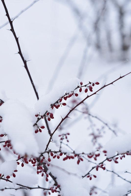 Красное на белом - Александр Сидоров