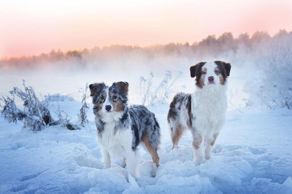 Мороз и солнце - Диана