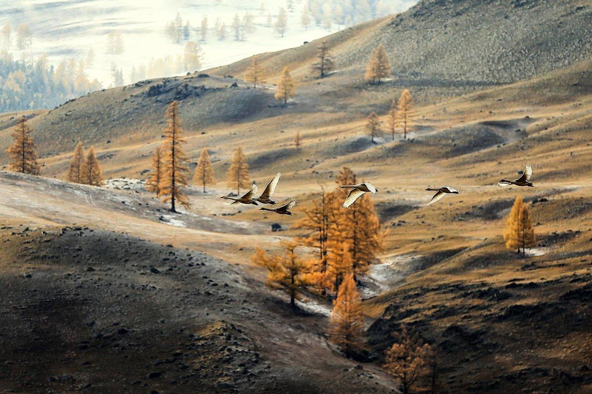 Полет в сказку - Ершов Андрей