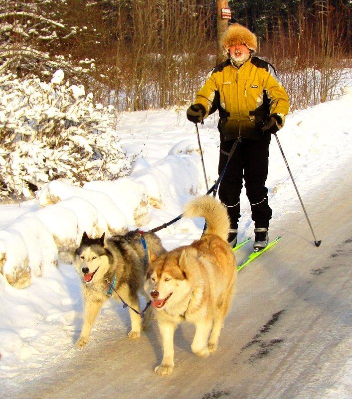 Лыжная упряжка - Андрей Снегерёв