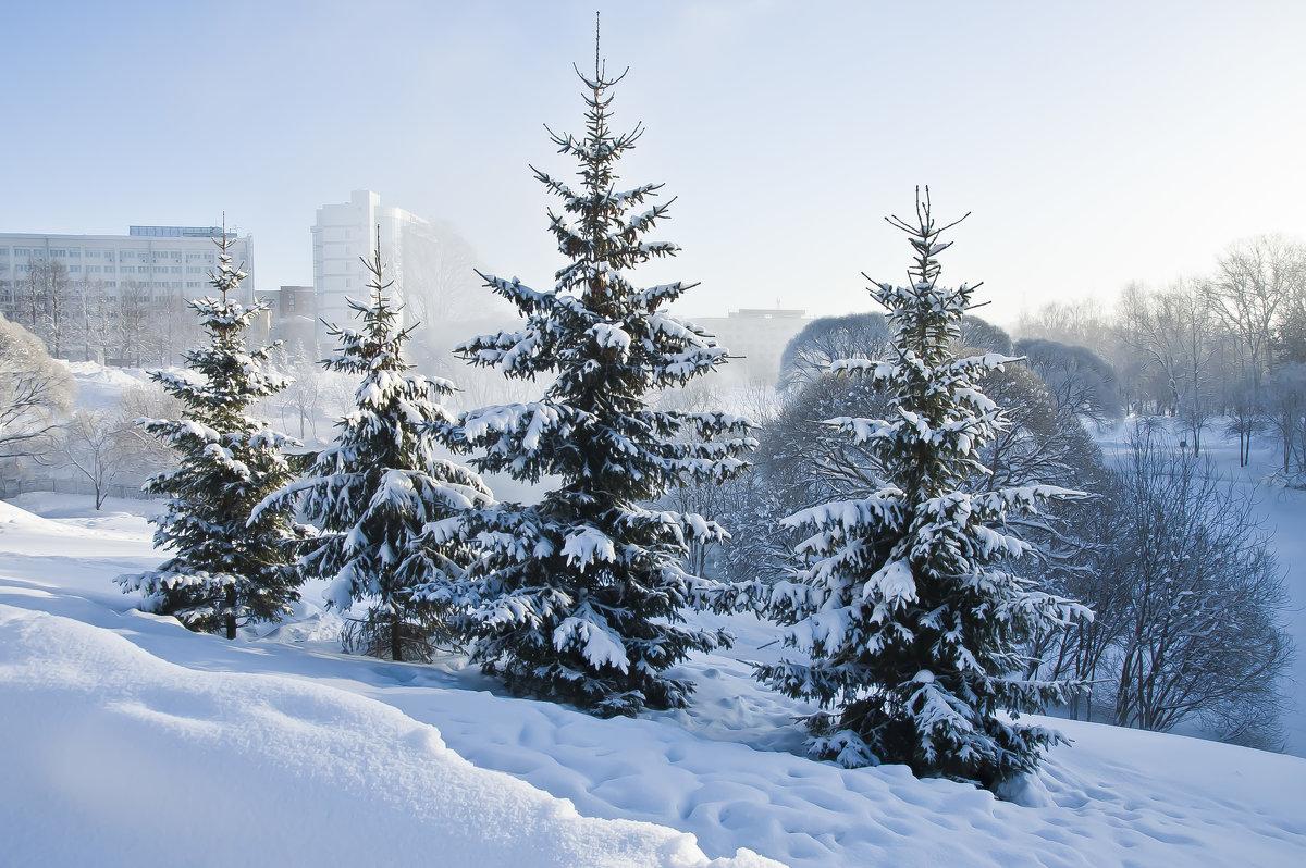 Рождественские ёлки. - Андрей Синицын