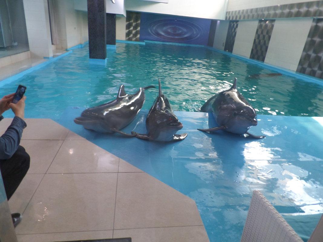 Дельфины позирующие. - Владимир