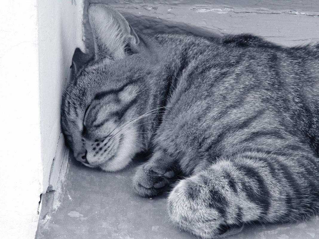 Он спит - Дмитрий