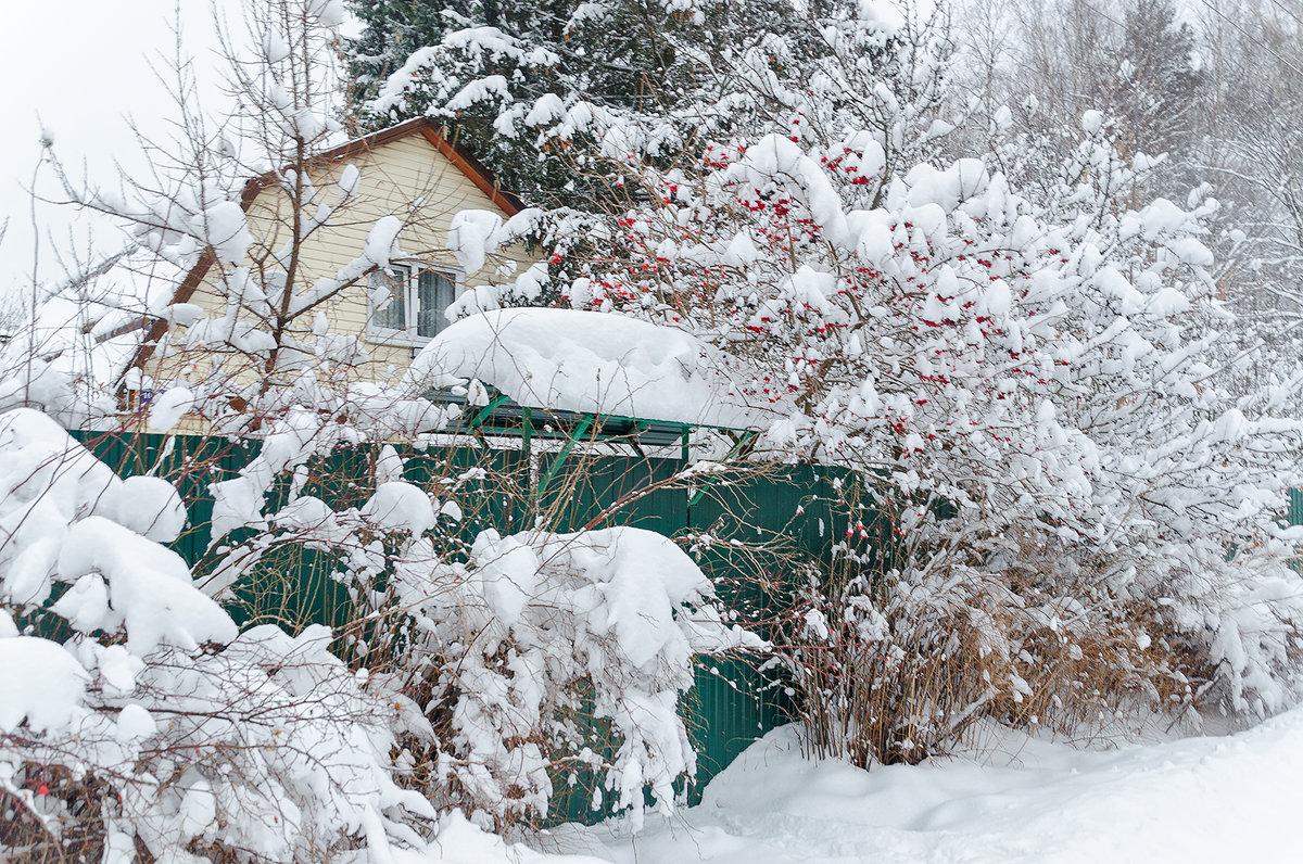 Снежный Январь - Ирина Шарапова