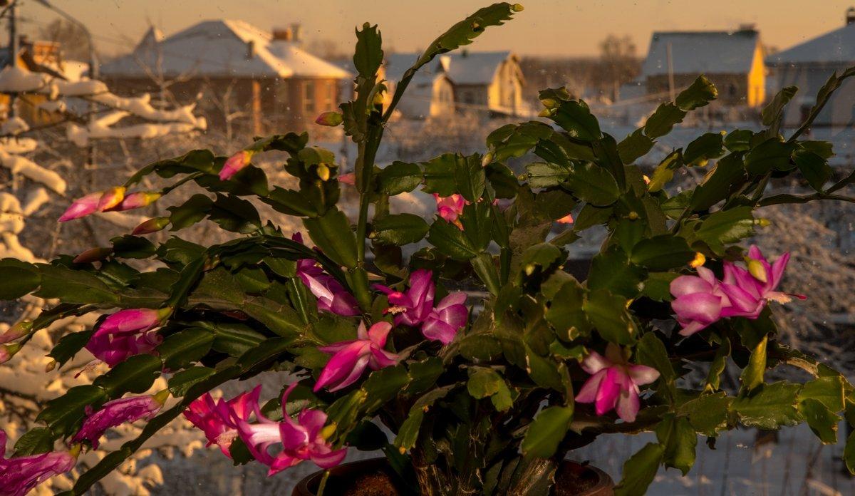 Цветок на подоконнике - Николай Алексеевич