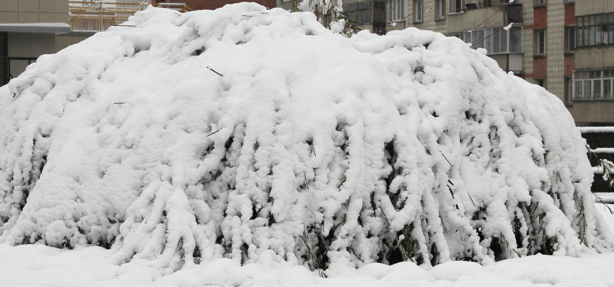 Снежный колокол - Наталья Золотых-Сибирская