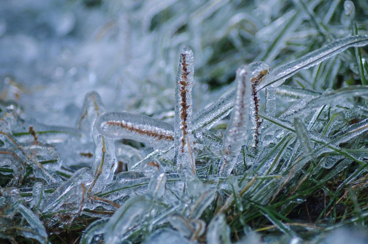 Ледяной плен - Андрей Щетинин