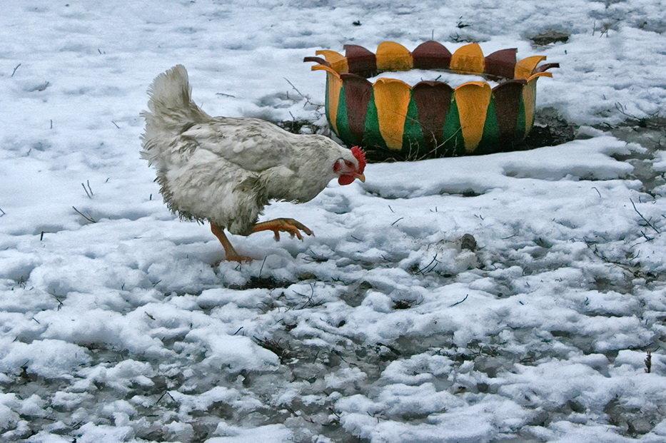 По первому снегу - Наталья S