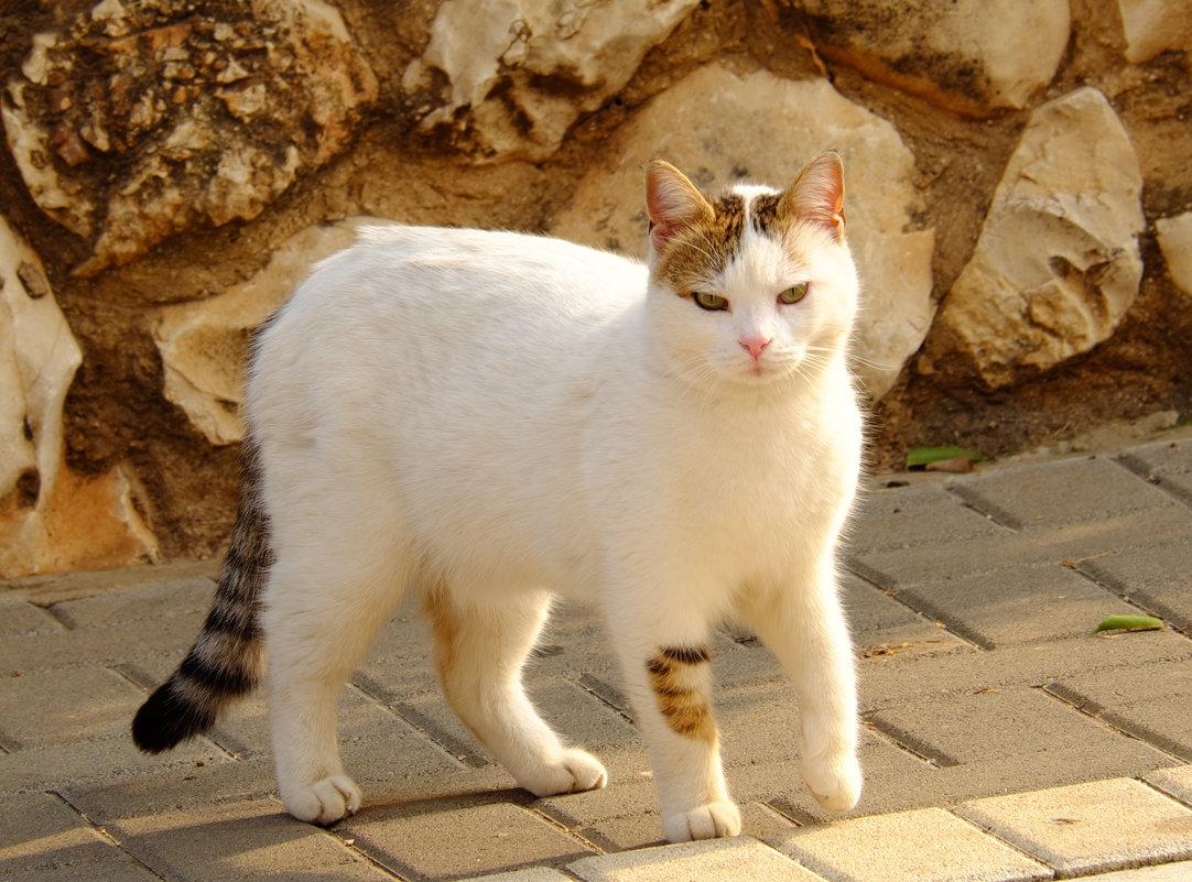 кошка - Александр Деревяшкин