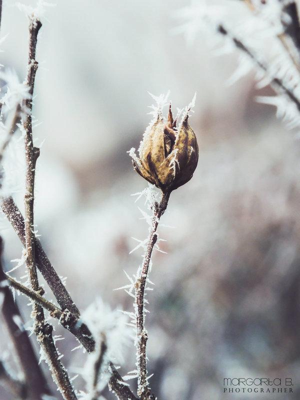 История одного зимнего дня - Маргарита Б.