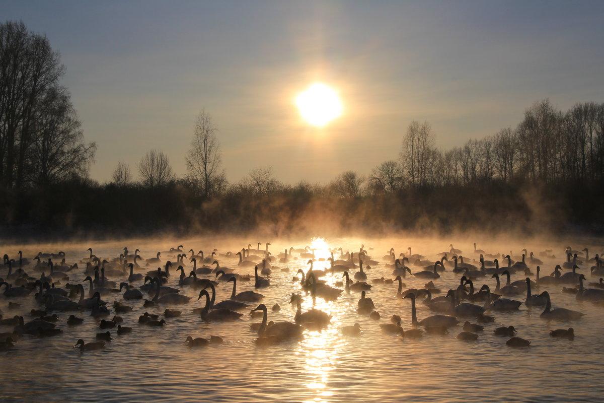 Закат на лебедином озере - Лариса Б