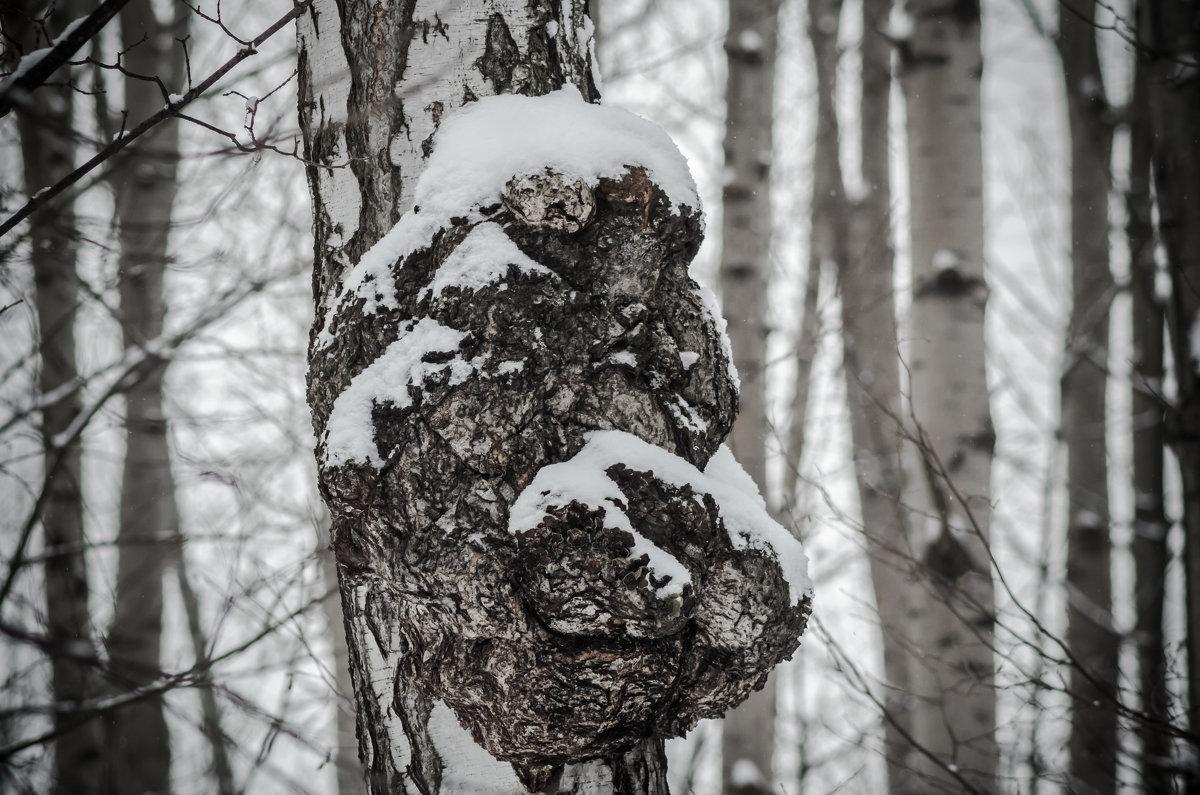 Медвежёнок - Андрей Щетинин