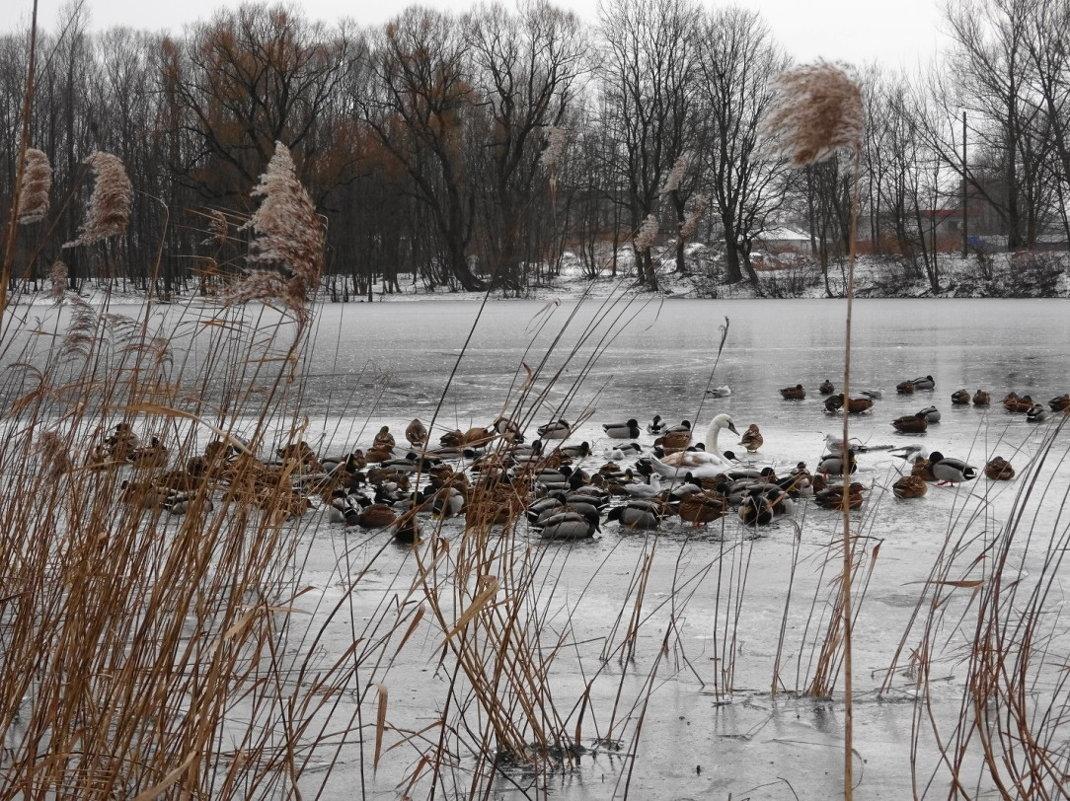 На следующий день на озере остался один лебедь в компании с сотоварищами - Маргарита Батырева