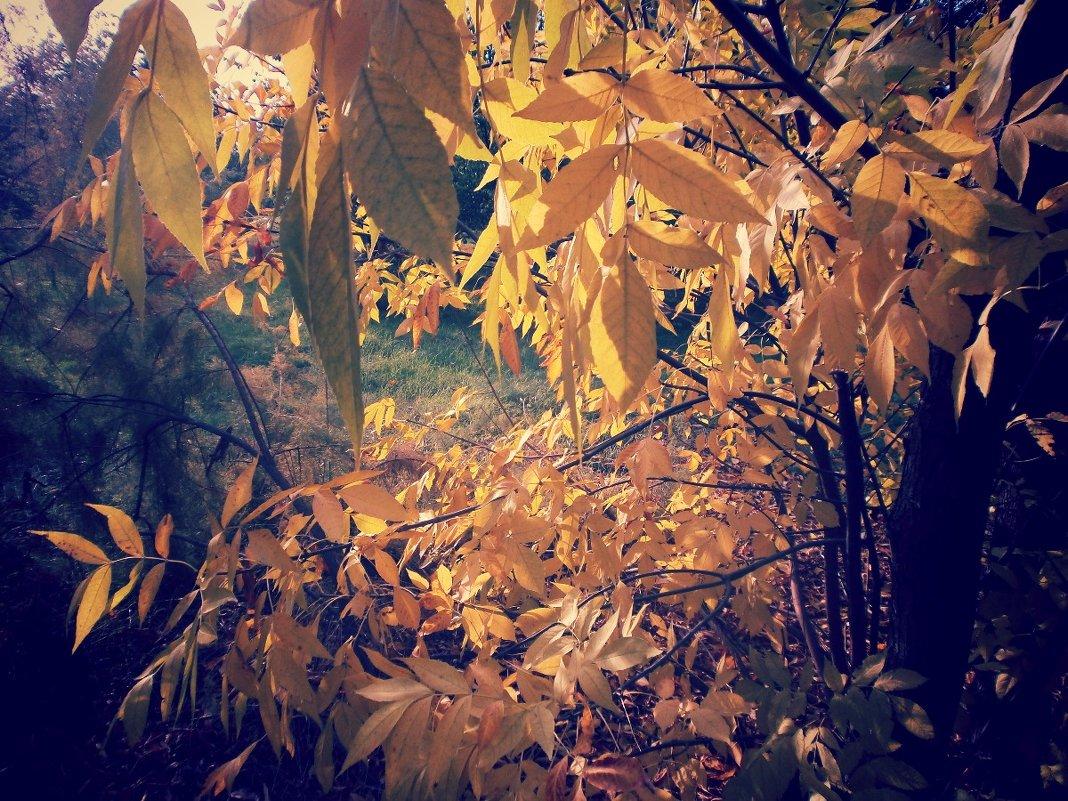 Осенняя листва - mAri