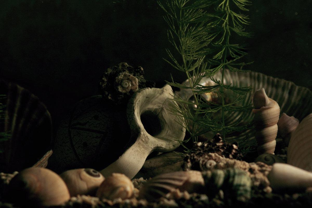 аквариум - павел