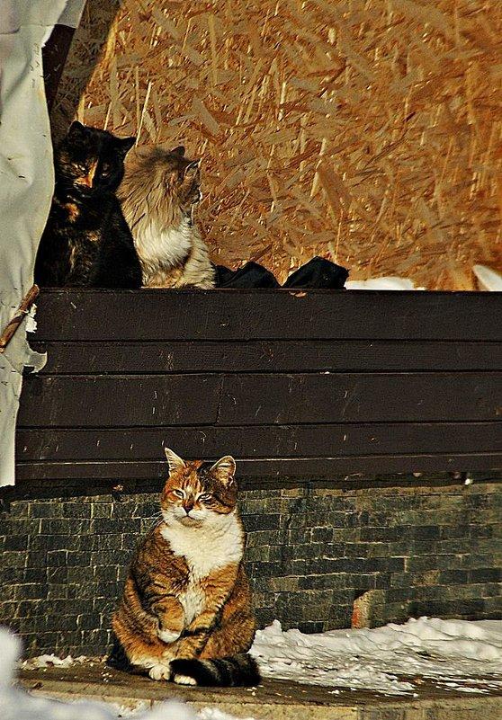 пляжные коты - Александр Корчемный