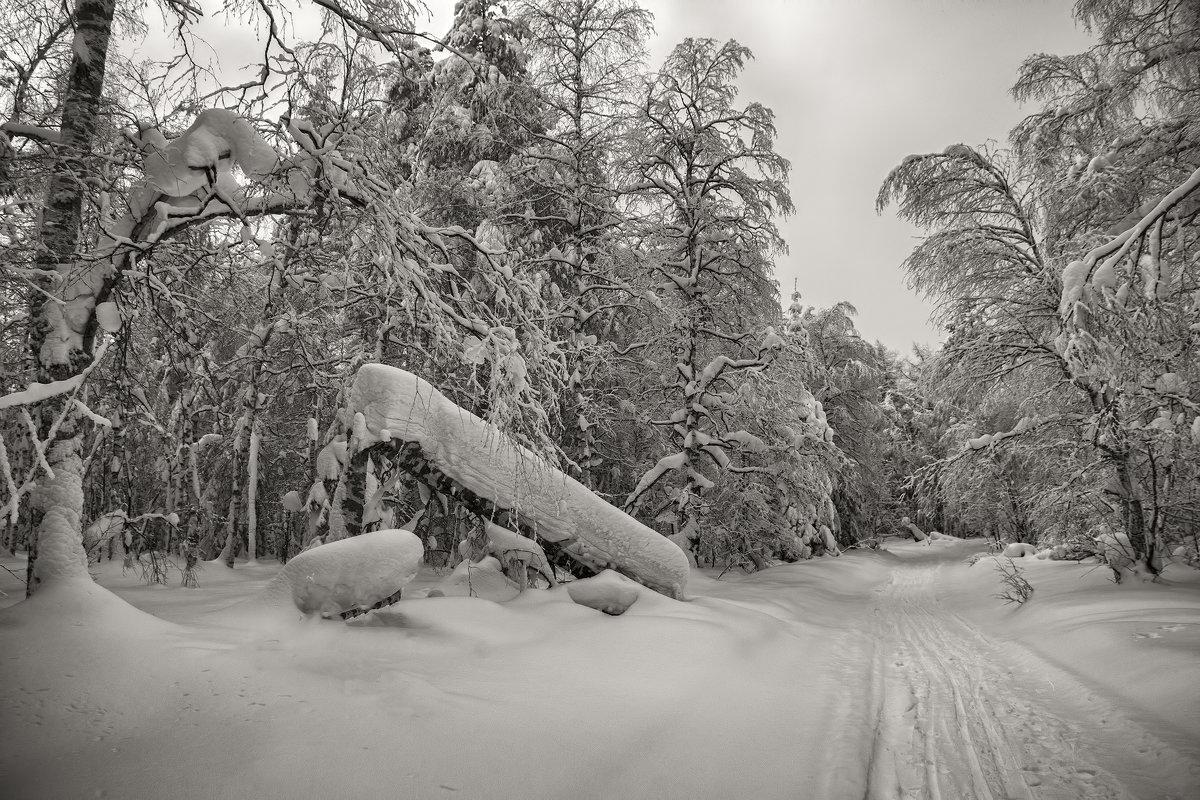 Зимняя дорога - vladimir Bormotov