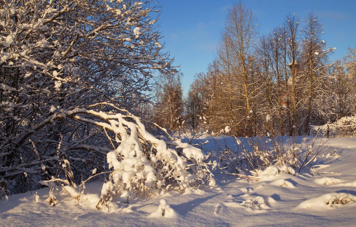 Зимний пейзаж с веткой - Александра