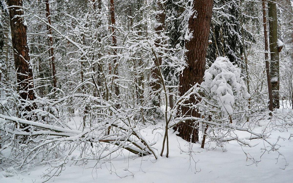 Снежный и холодный январь - Милешкин Владимир Алексеевич