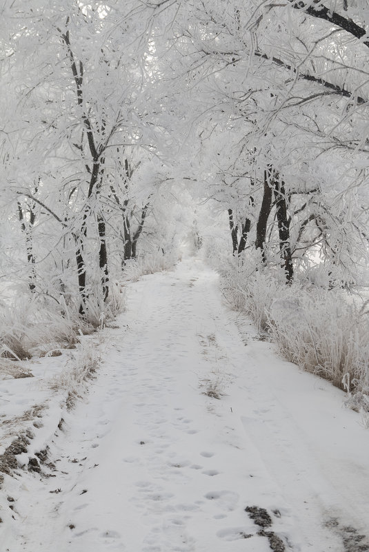 зима - олеся