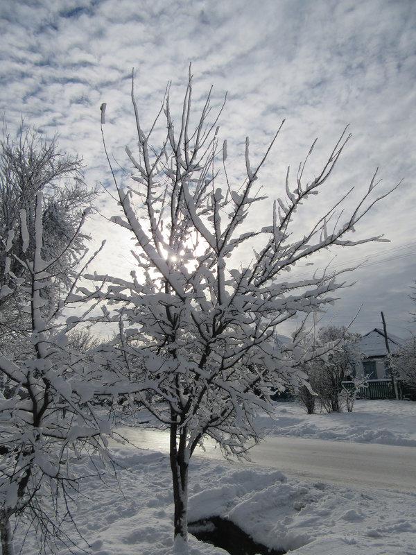 Скромная красота городских деревьев. - Вячеслав Медведев