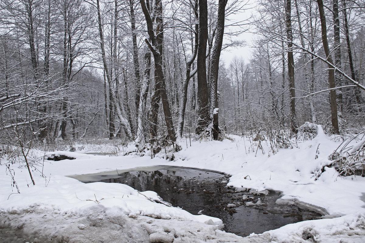 лесной ручей - оксана