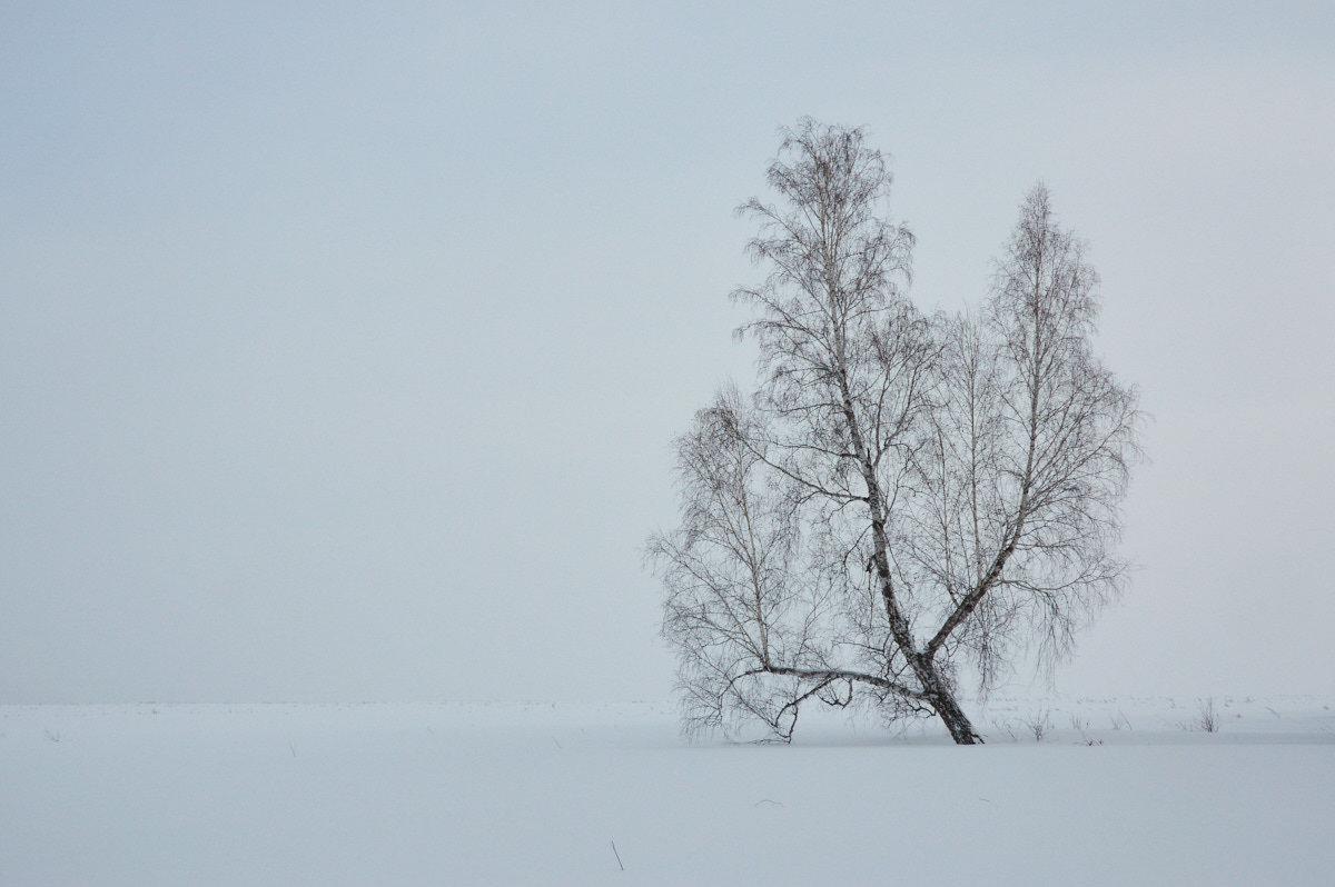 белое безмолвие - Николай Мальцев