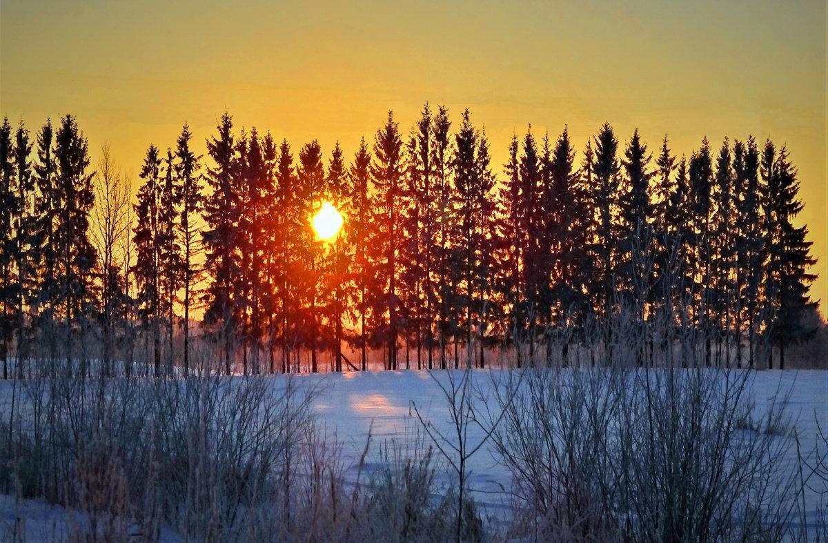 Закат за елками - Валерий Талашов