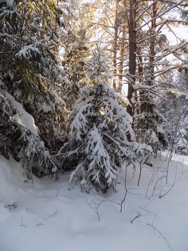 ...зимнее настроение - Алена