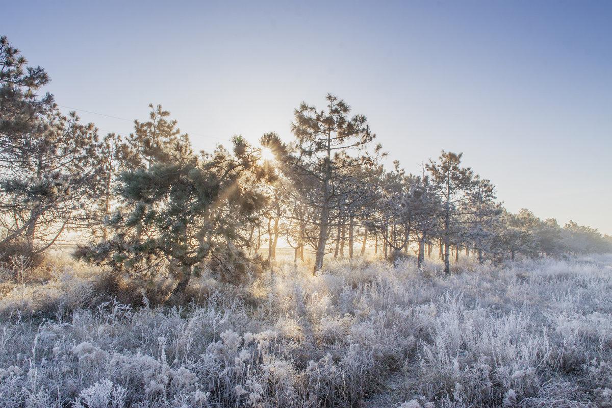 Мороз и Солнце - Алина Шостик