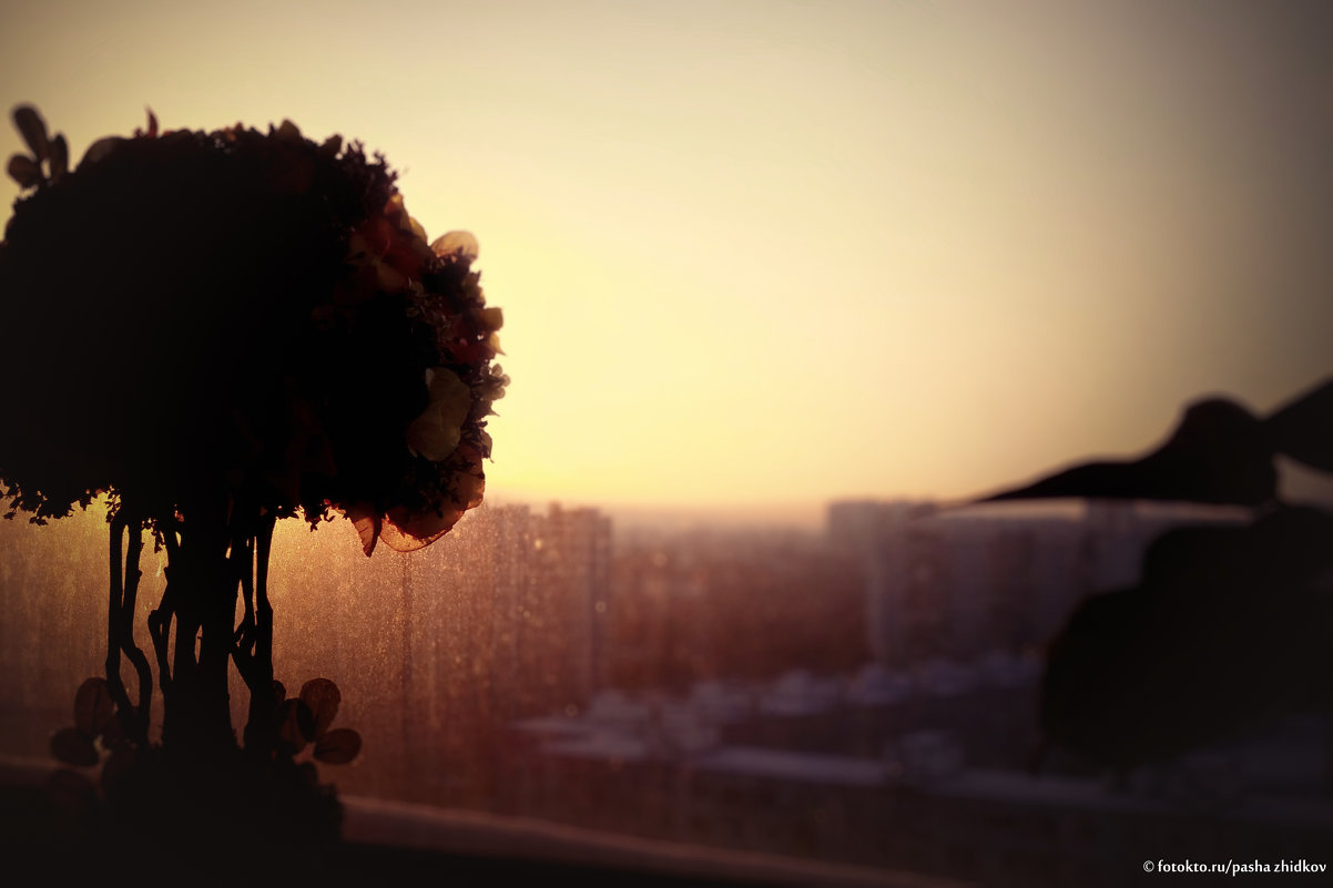 horizont - Pasha Zhidkov