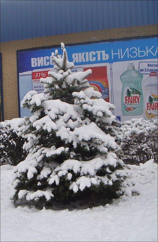 Мороз снежком укутал - Нина Корешкова