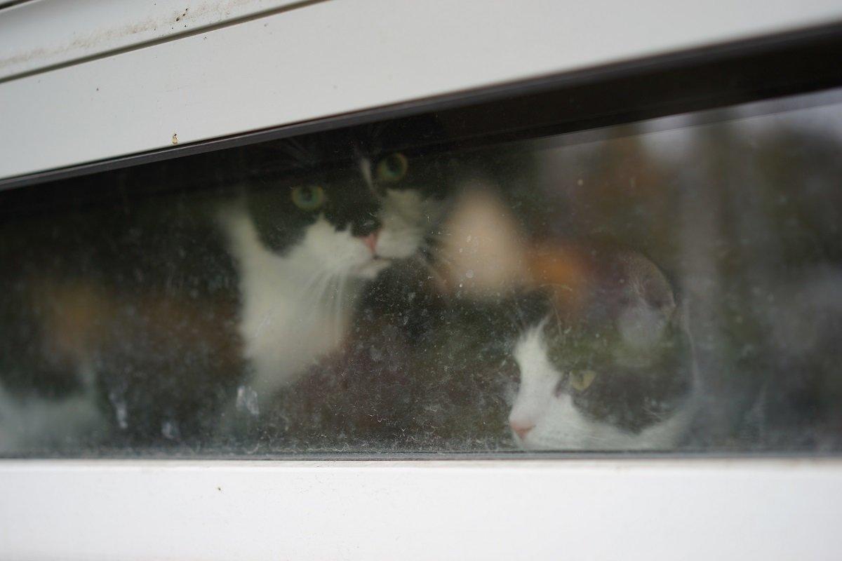 Две кошки - Sony 2 Sony 2