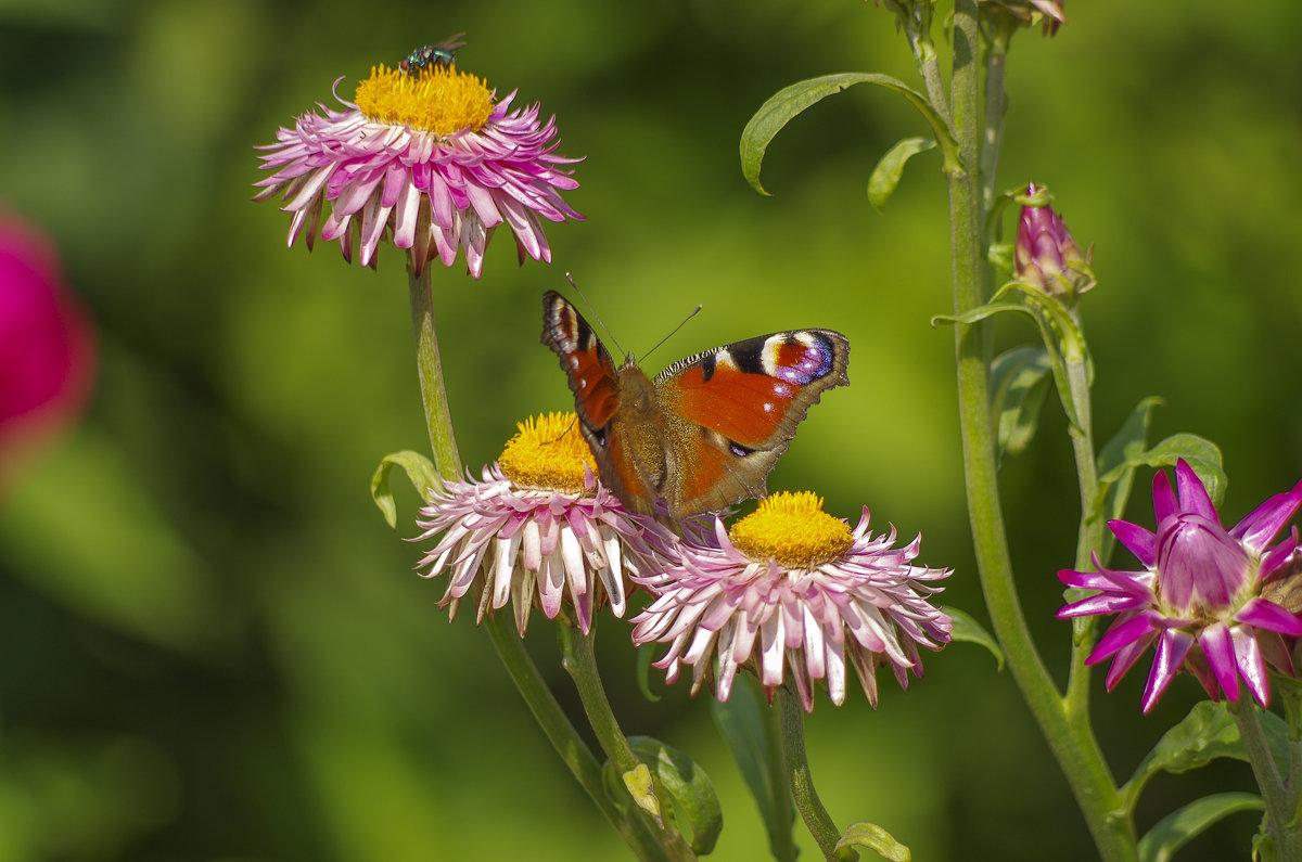 Бабочка и муха - Михаил Измайлов