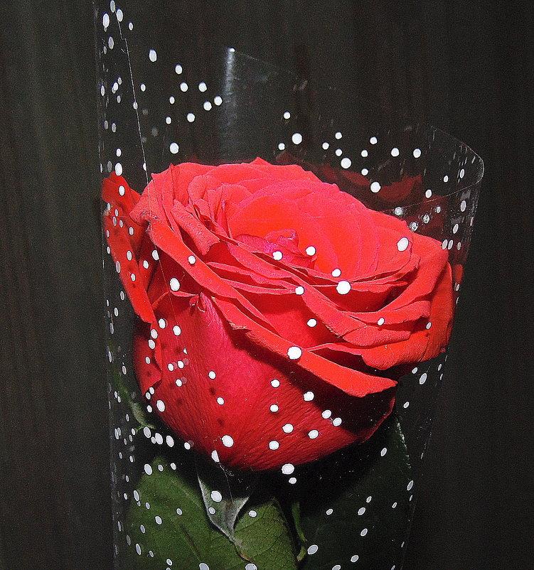 Роза алая моя. - Мила Бовкун