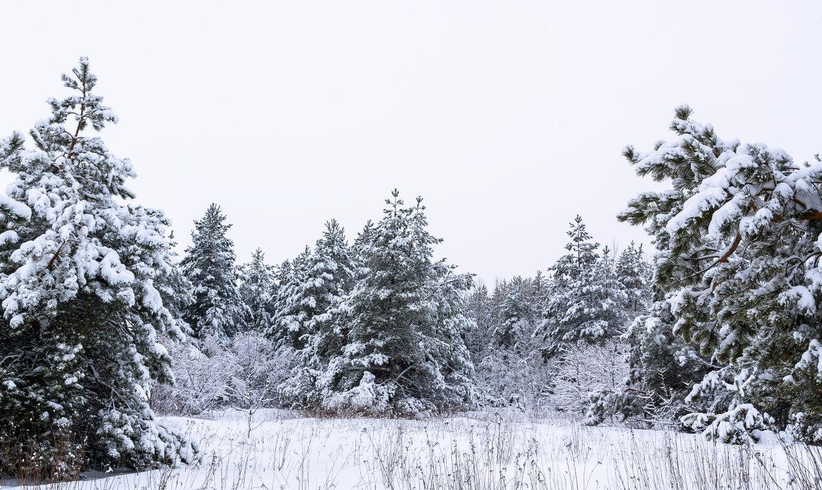 Выпал снег. - Владимир M