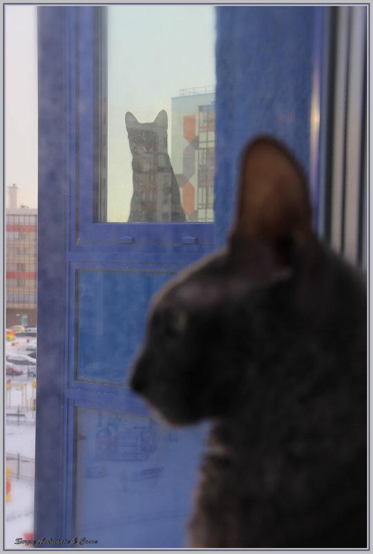 И на кошек — ноль внимания. Вот это воспитание! - Сергей Андриянов