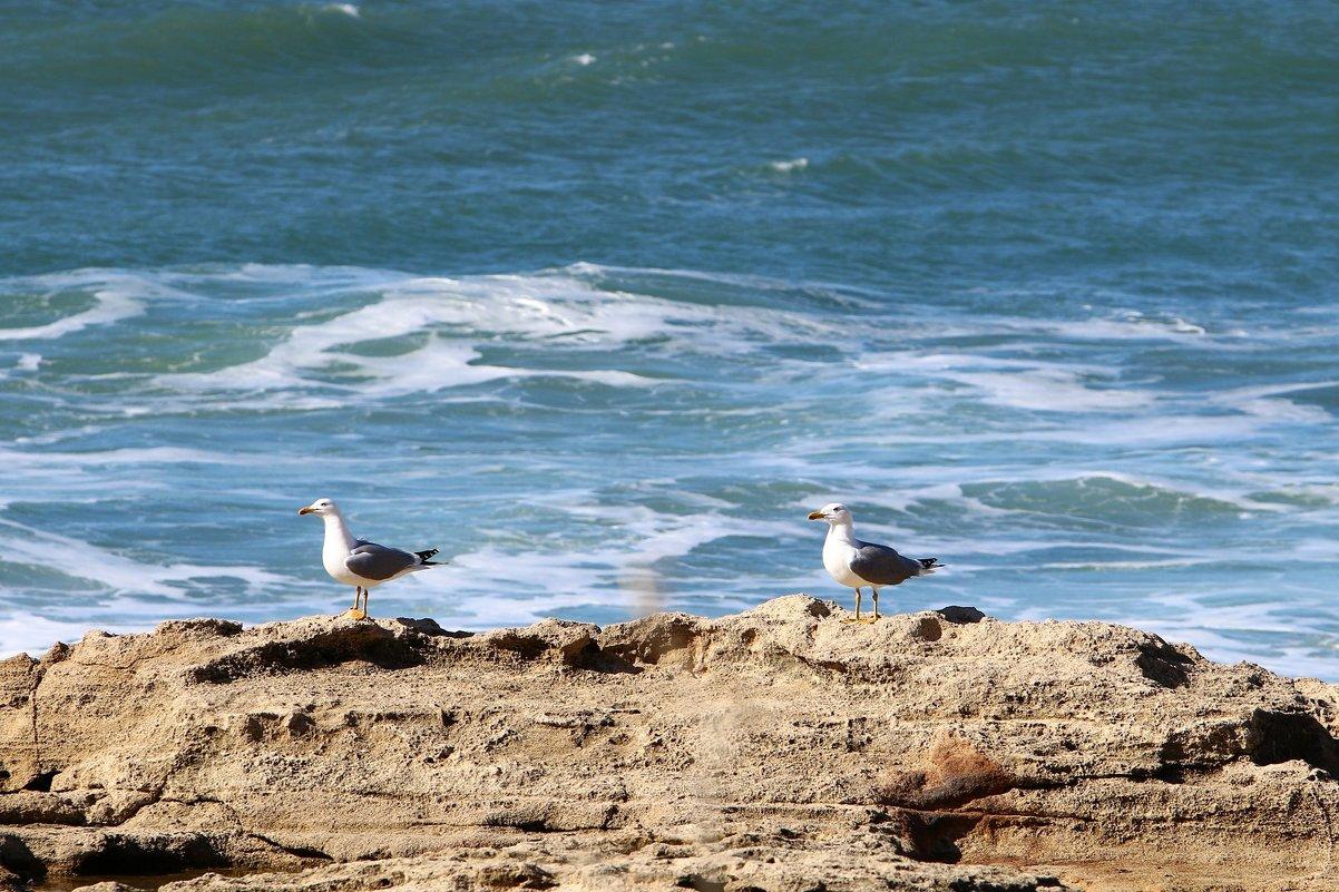 чайки на берегу моря - vasya-starik Старик