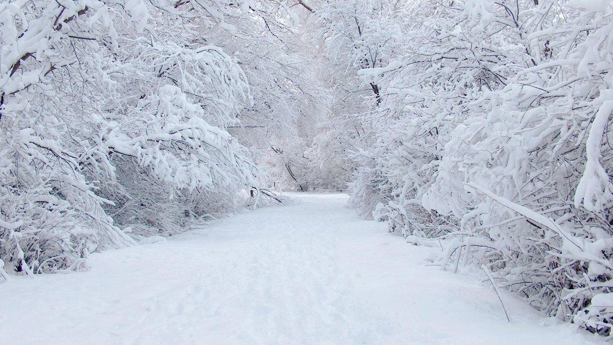 Зима. - Игорь Бойко