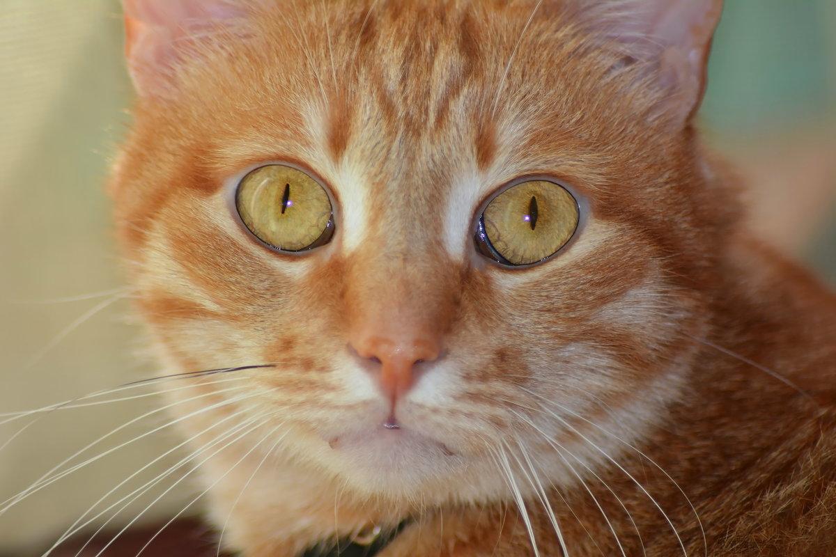 Эти глаза напротив... - 4uika (Алла) Тарасова