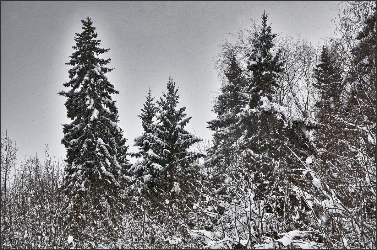 На старый Новый год - Viktor Pjankov