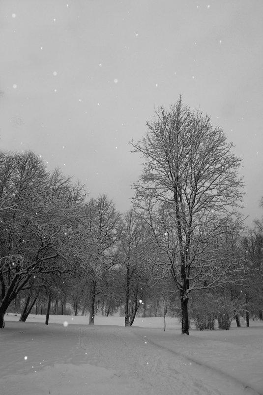 Прогулка в снегопад вблизи Павловска..... - Tatiana Markova