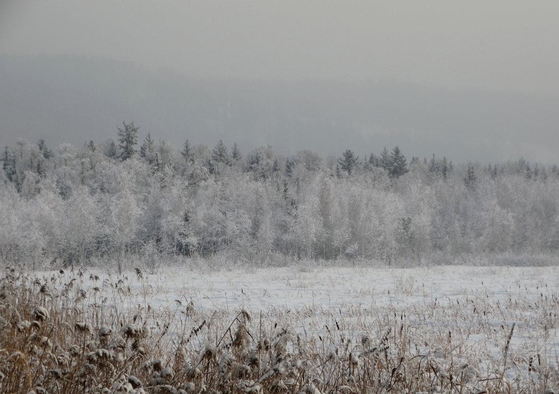 Зимнее серебро - Alla Swan