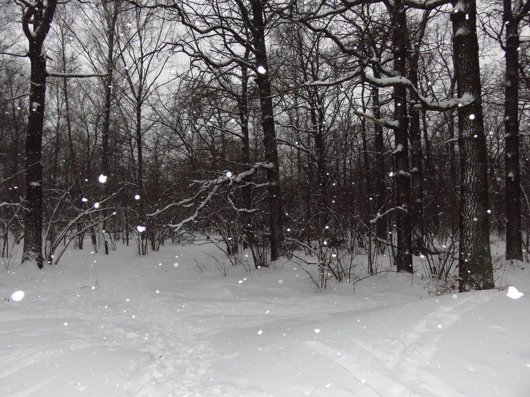 Ура! Гидрометцентр не ошибся: снег был - Андрей Лукьянов