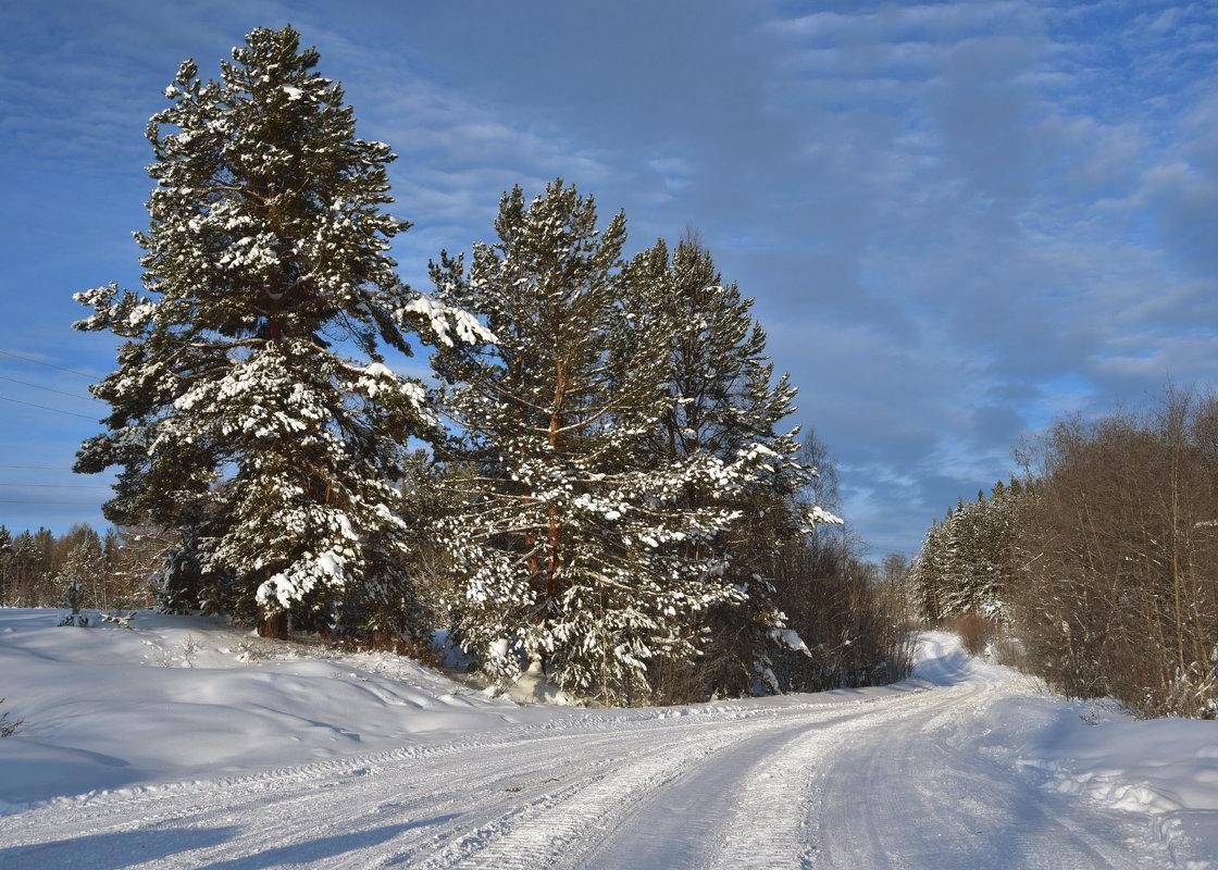 Дорога в лесу. - Наталья