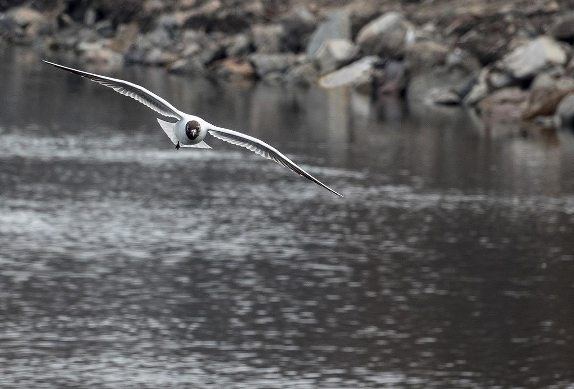Хроника атакующей чайки - Юрий Муханов