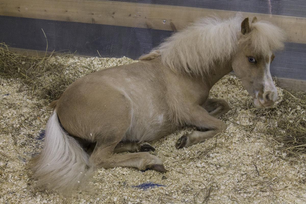 А пони - тоже кони - Людмила Волдыкова